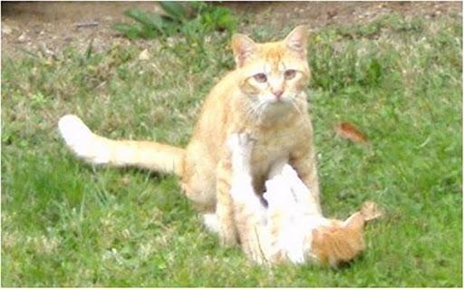 Mamá gata naranjita y su bebé abandonados en jardines Madrid Legane14