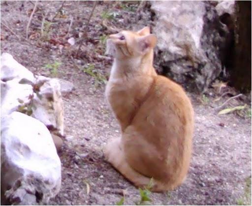 Mamá gata naranjita y su bebé abandonados en jardines Madrid Legane15