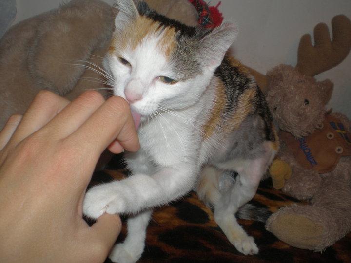 La gatita Malena nos necesita a todos. Madrid Asoc. GATA Malena21