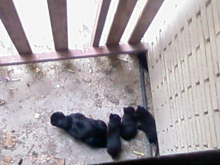 Mamá gata y sus 3 bebés en la calle. Madrid URGEN ACOGIDAS Mami110