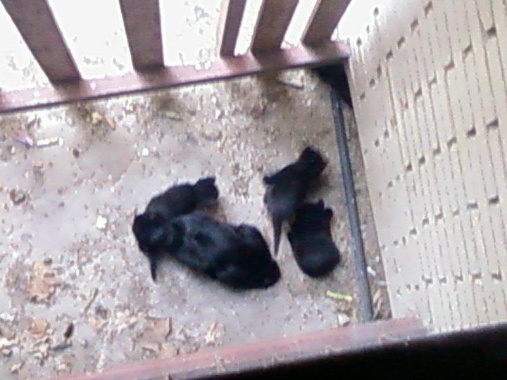 Mamá gata y sus 3 bebés en la calle. Madrid URGEN ACOGIDAS Mami210