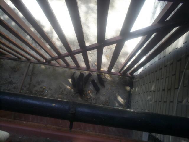 Mamá gata y sus 3 bebés en la calle. Madrid URGEN ACOGIDAS Mami310