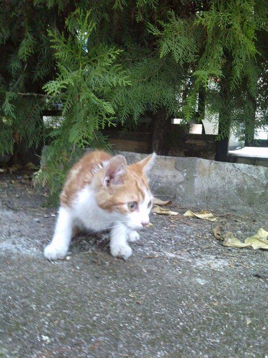 Nino, gatito de 2 meses en barrio marginal en Sevilla URGEEE Nino11