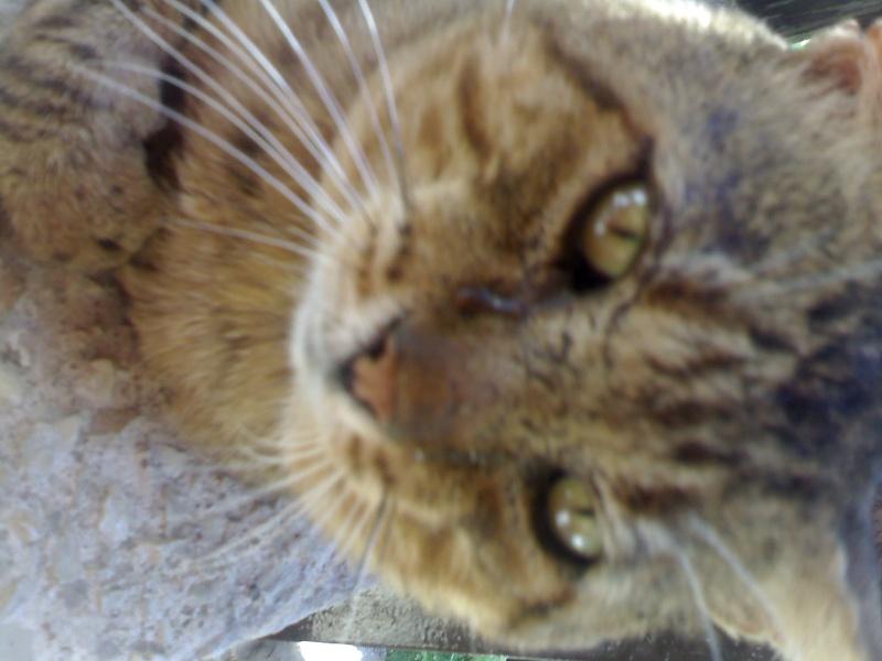 Leoncito,gatito abandonado y enfermo.Los otros gatos lo atacan Madrid Sandra11