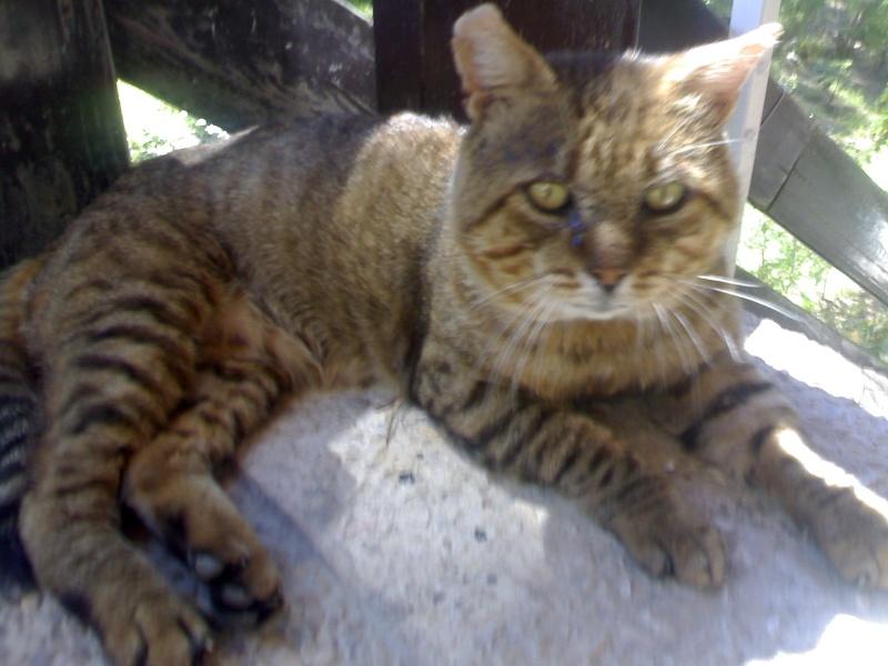 Leoncito,gatito abandonado y enfermo.Los otros gatos lo atacan Madrid Sandra12