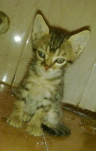 Rocio, gatita que ha parido bajo un coche. Madrid Asoc. GATA Skar10