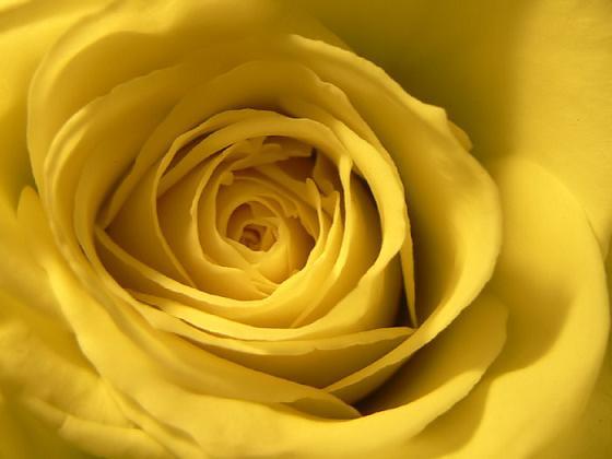 Volim žuto Zuto0f10