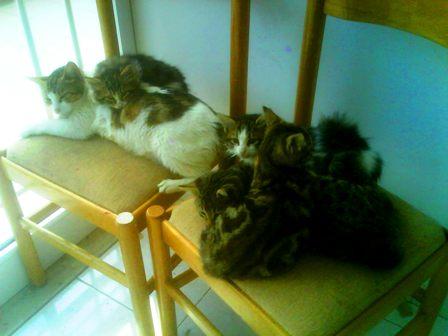Η γάτα της πολυκατοικίας Dsc00110