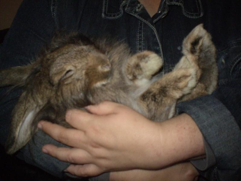ROSALIE  petite lapine bélier Rosali11