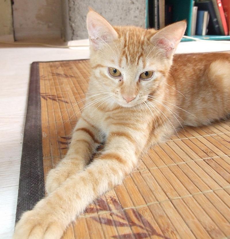 2 chatons roux 3 mois et demi Dscf2511
