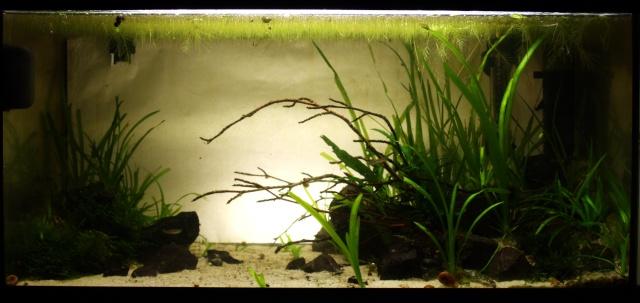 54L planté  Img_3714