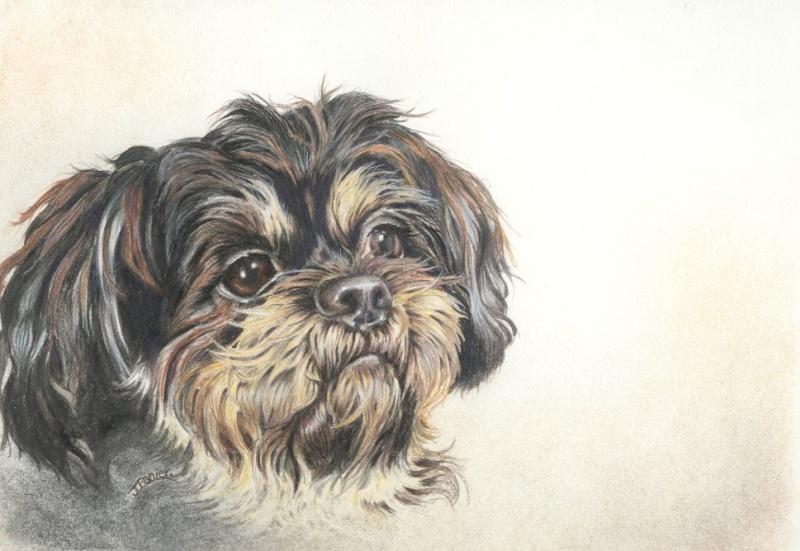 portraits de 2 chiens Swity_10