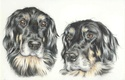 portraits de 2 chiens Hov_1010