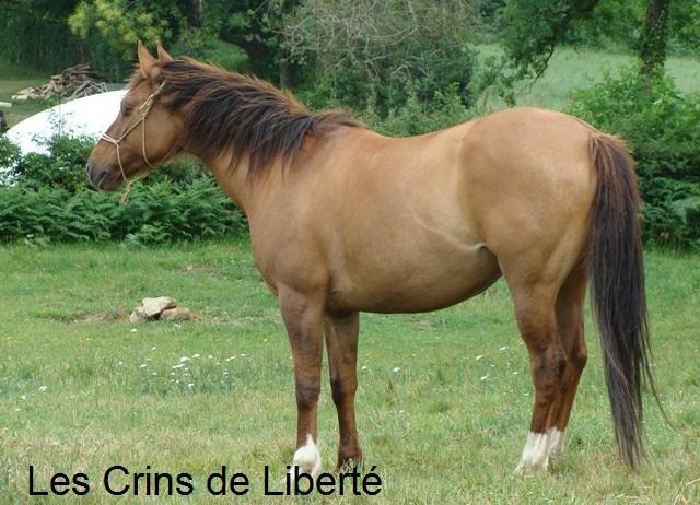 (Dept 63) DUN,  fjord/quarter horse, Sauvée par Morgane63 ! (Octobre2012) - Page 2 Dsc05017