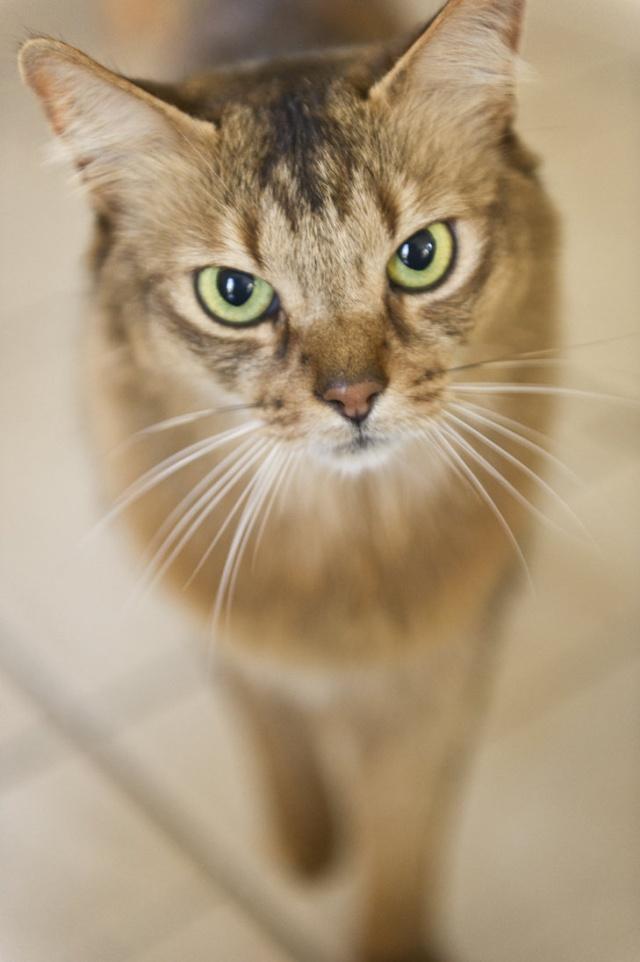 Images sur le forum Cat_ey11