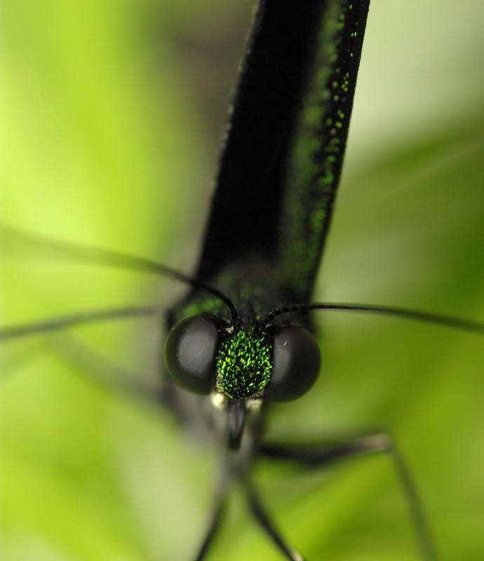 Rencontre papillons exotiques à Vannes 11 juin 2011 - Page 3 _igp3110