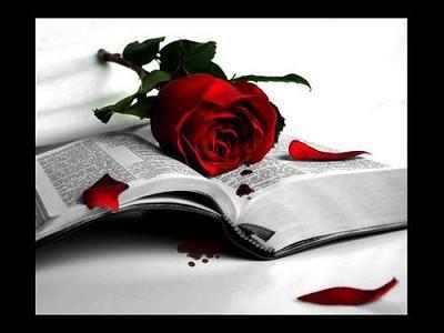 FELICES FIESTAS - Página 3 Rosa-e11