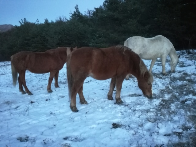 (04) CARAMEL dit GUSs - ONC Poney né en 1991 - NON MONTABLE - A ADOPTER (126 € + don libre) - Page 2 Img_2044