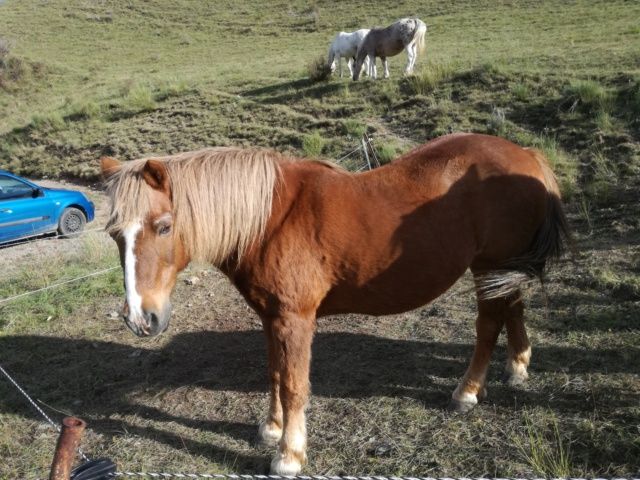(04) CARAMEL dit GUSs - ONC Poney né en 1991 - NON MONTABLE - A ADOPTER (126 € + don libre) - Page 2 Img_2046