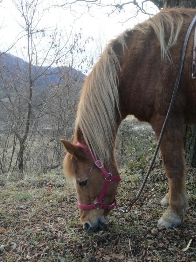 (04) CÂLINE - Poney née en 1990 - NON MONTABLE - A ADOPTER (126 € + don libre) Img_2078