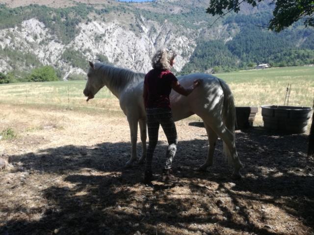 (04) ROSITA - ONCS née en 2010 - A ADOPTER (306 € + don libre) Img_2100