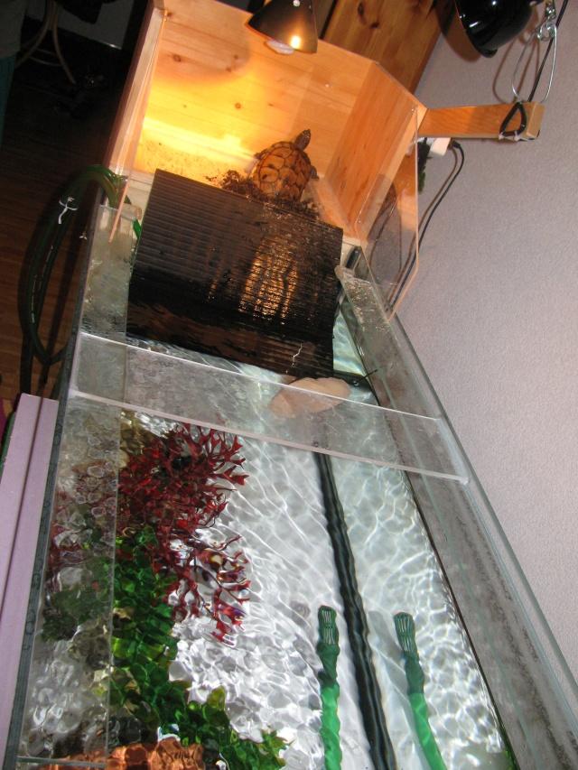 mon aquarium avec plage de ponte 00510