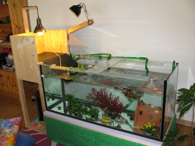 mon aquarium avec plage de ponte 03111