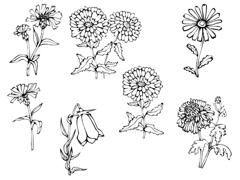 Harleii Flower10