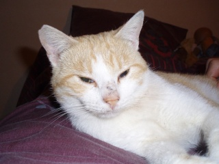 Chat mâle castré 7 mois  Pa160011