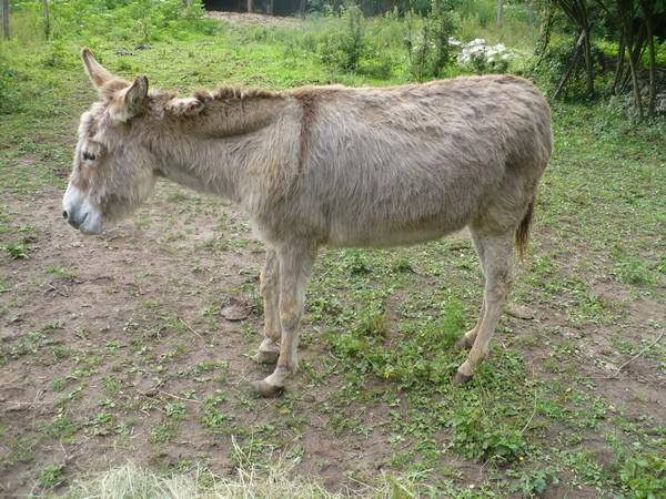 HUGOLINE - ânesse née en 1990 - adoptée en juin 2011 par Malik70 Arriva10