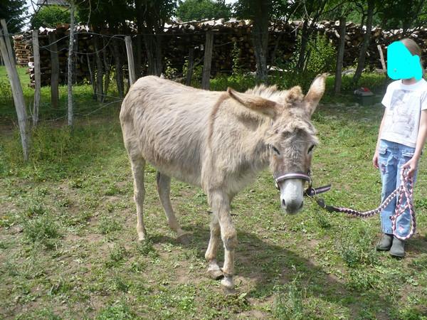 HUGOLINE - ânesse née en 1990 - adoptée en juin 2011 par Malik70 Hugoli16