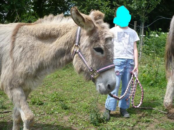 HUGOLINE - ânesse née en 1990 - adoptée en juin 2011 par Malik70 Hugoli17