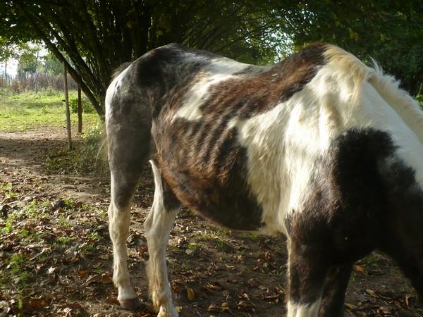 LADY - ONC née en 1987 - adoptée en janvier 2011  par Mélanie Lady_a11