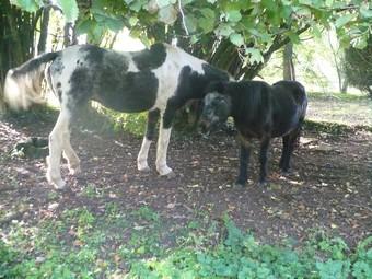 LADY - ONC née en 1987 - adoptée en janvier 2011  par Mélanie Lady_a24