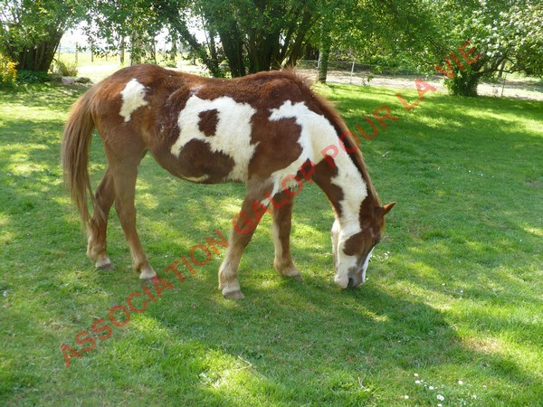 WALANIE (VANILLE) - ONC poney - adoptée en avril 2011 par voulk  - Page 3 Vanill16
