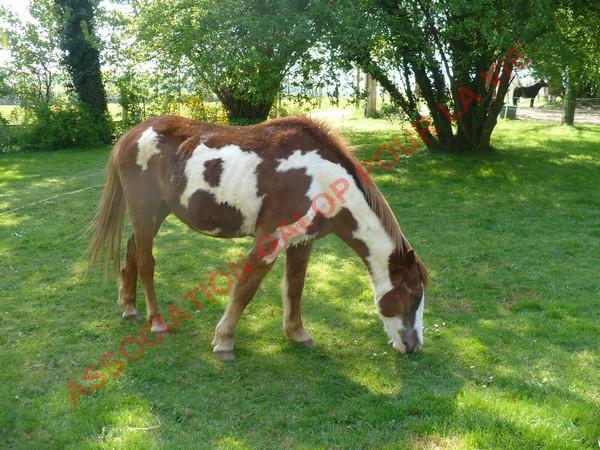 WALANIE (VANILLE) - ONC poney - adoptée en avril 2011 par voulk  - Page 3 Vanill17