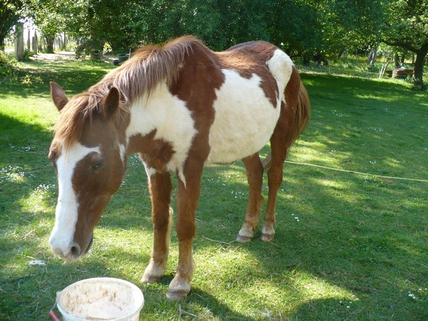 WALANIE (VANILLE) - ONC poney - adoptée en avril 2011 par voulk  - Page 3 Vanill20