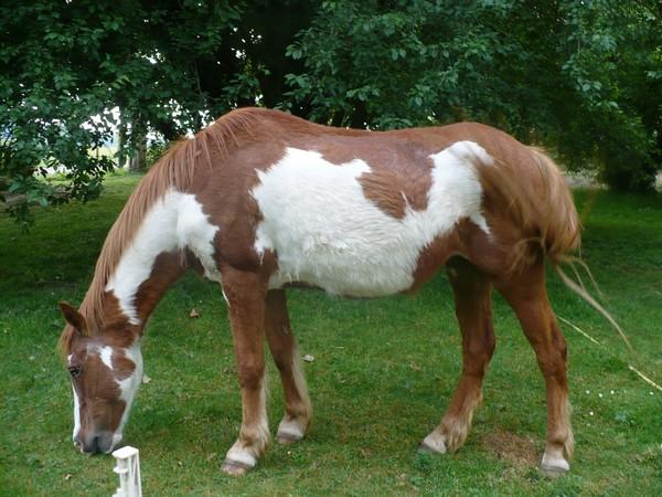 WALANIE (VANILLE) - ONC poney - adoptée en avril 2011 par voulk  - Page 3 Vanill24