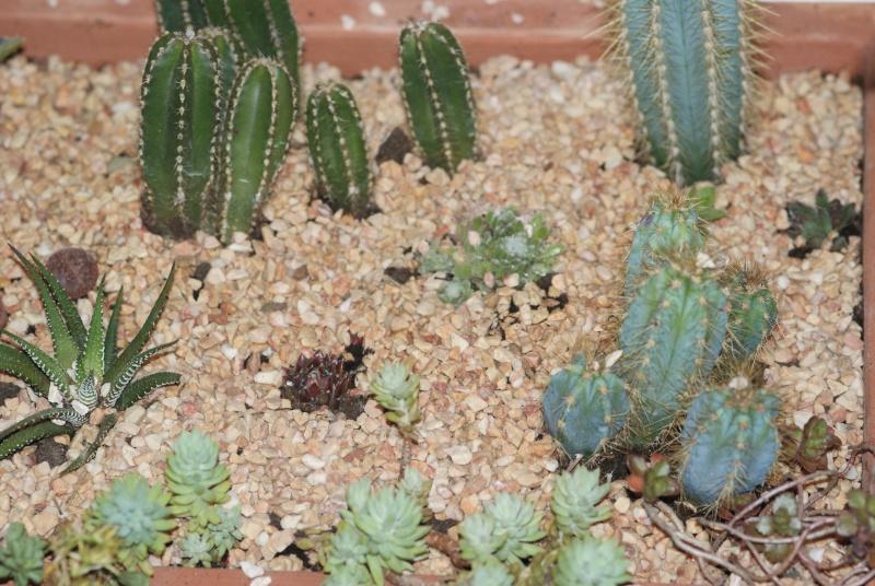 Cactus & co en climat tempéré Inconn17