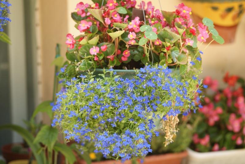 idee jardiniere Pavots23