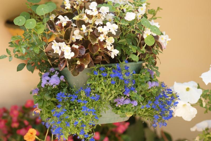 idee jardiniere Pavots24