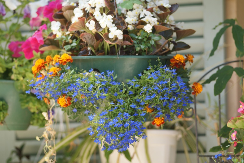idee jardiniere Pavots25