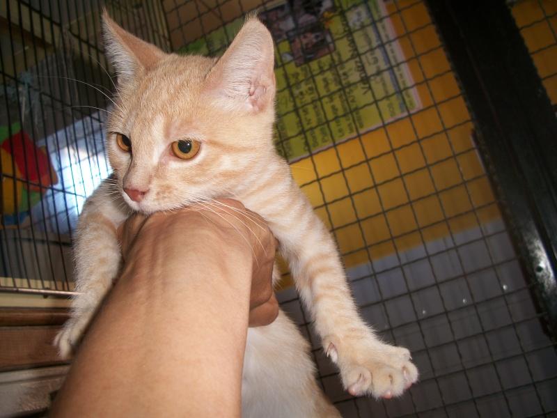 BANANIA  (chaton roux) Banabn17