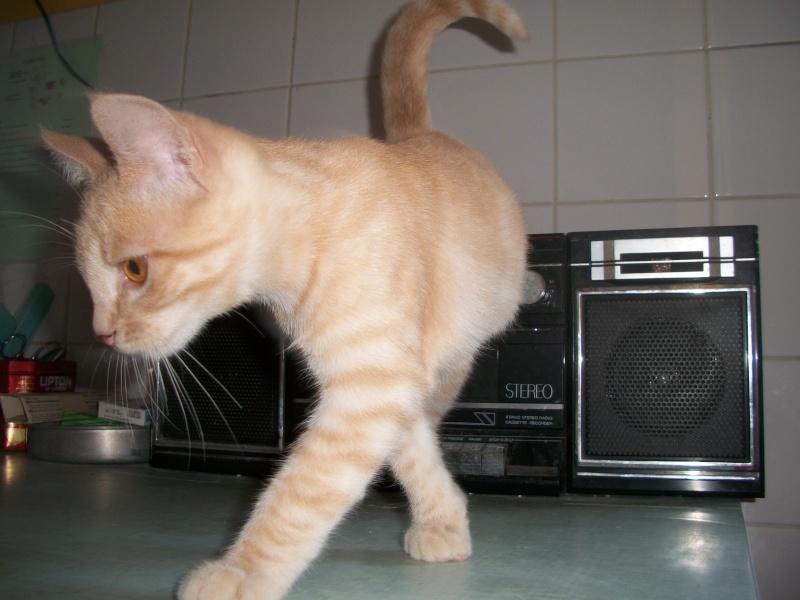 BANANIA  (chaton roux) Banabn20