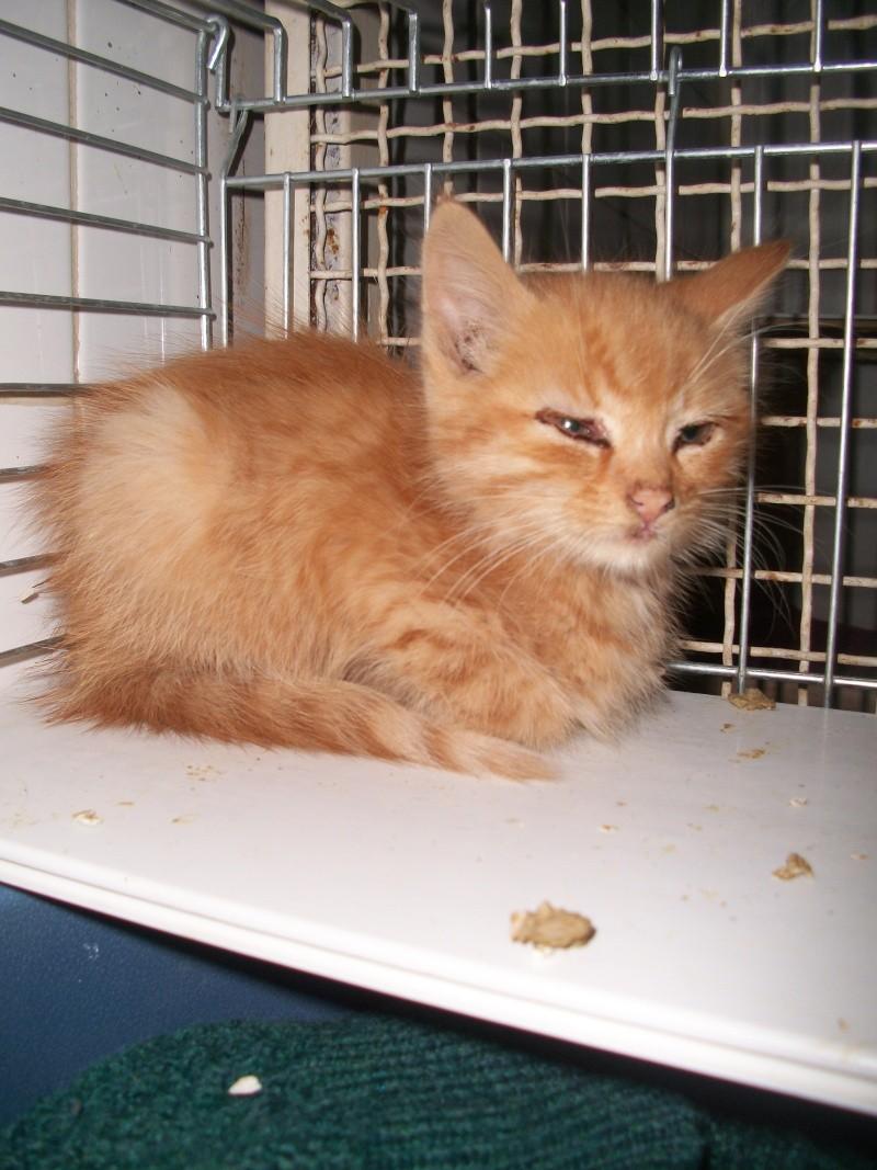 Trouvé à Boudes, chaton roux, Noucky Chilie36