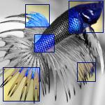 Ma vie, ma toute petite existence... Fish0110