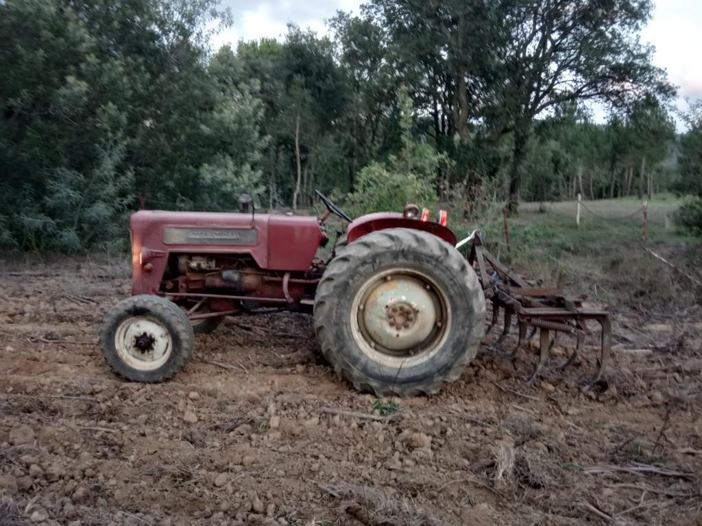 He comprado un International-Harvester B 414 Diesel de 1964. Img_2015