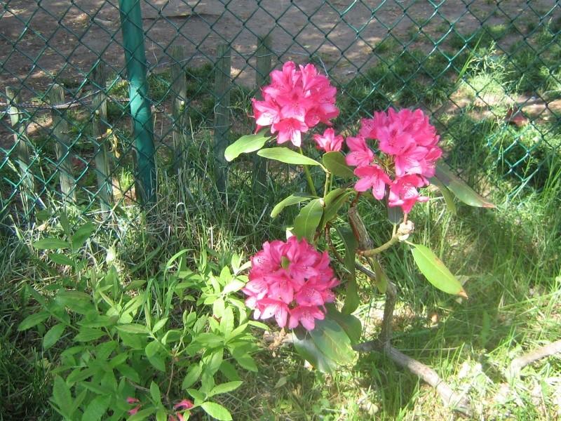 Mes Arbres et Arbustes et fleurs 01011