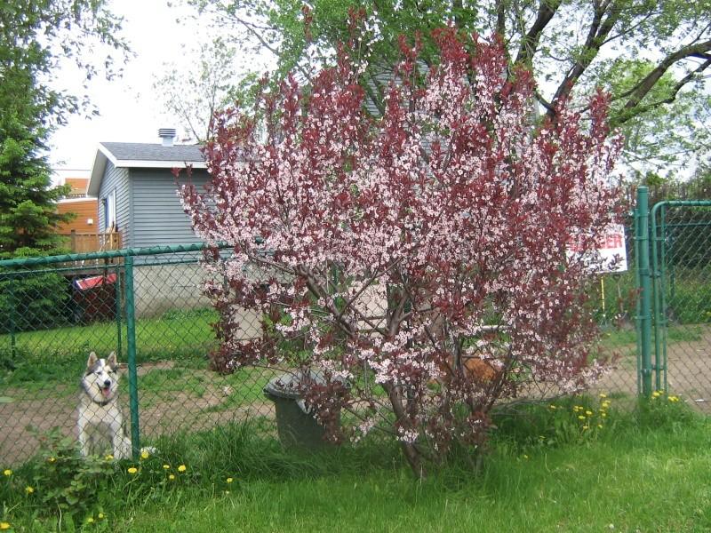 Mes Arbres et Arbustes et fleurs 02910