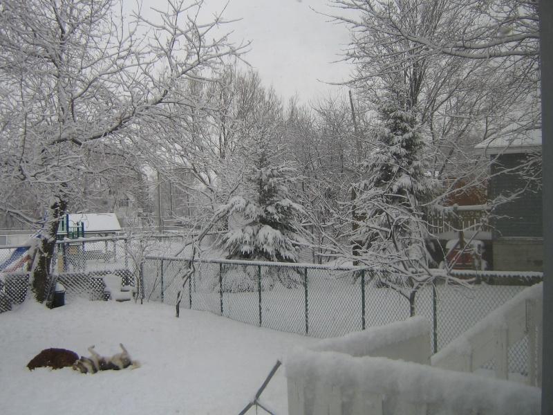 Vision de printemps...en ce 21 avril 2011 Que_la11